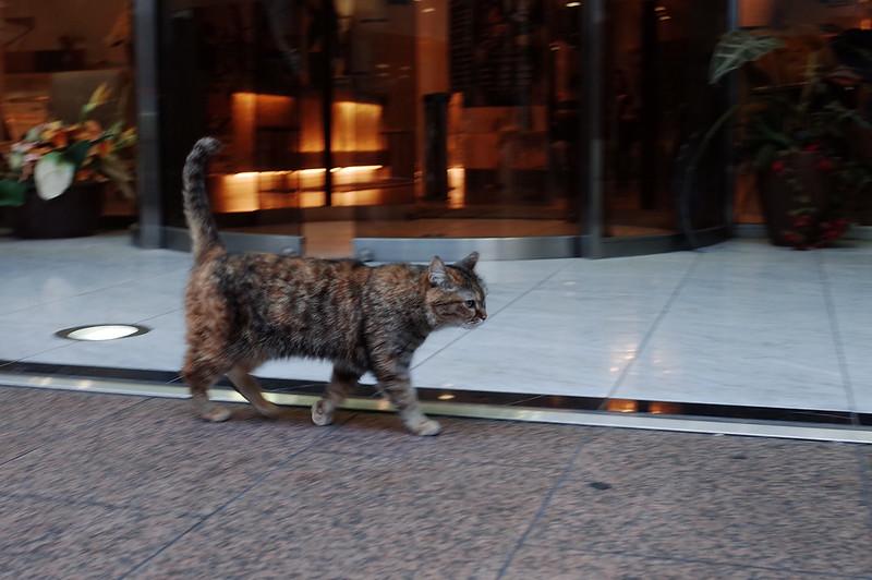 池袋西口池袋グランドホテルの猫 キジ虎