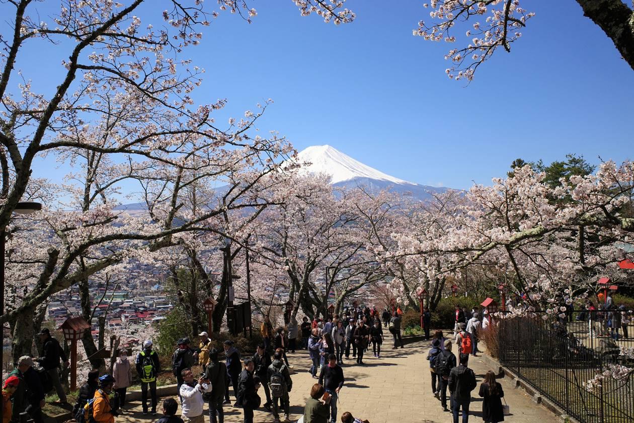 新倉山浅間公園 満開の桜と観光客