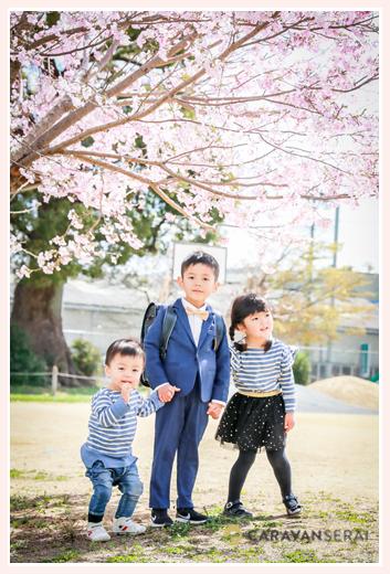 小学校入学記念のファミリーフォト 桜の花の下で手をつなぐ三兄弟