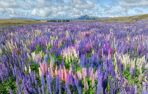 Lupin Party!
