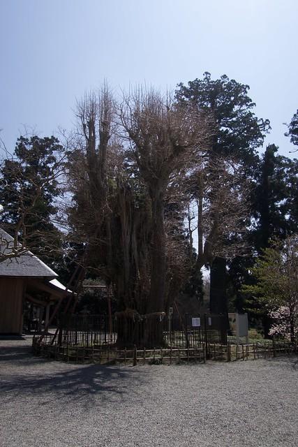 murayamasengenjinja_009