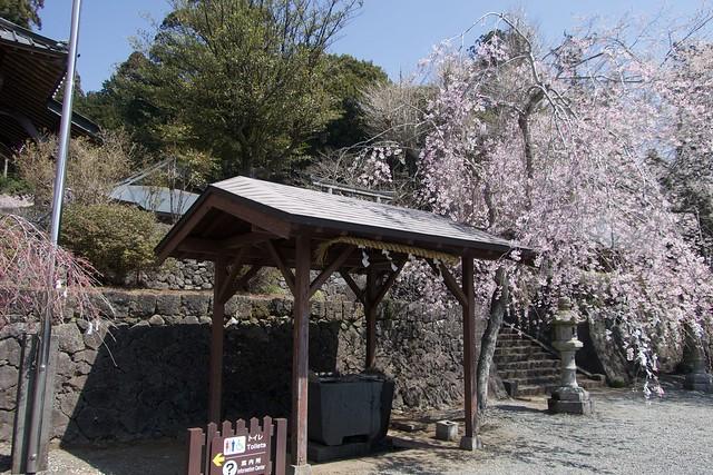 murayamasengenjinja_006