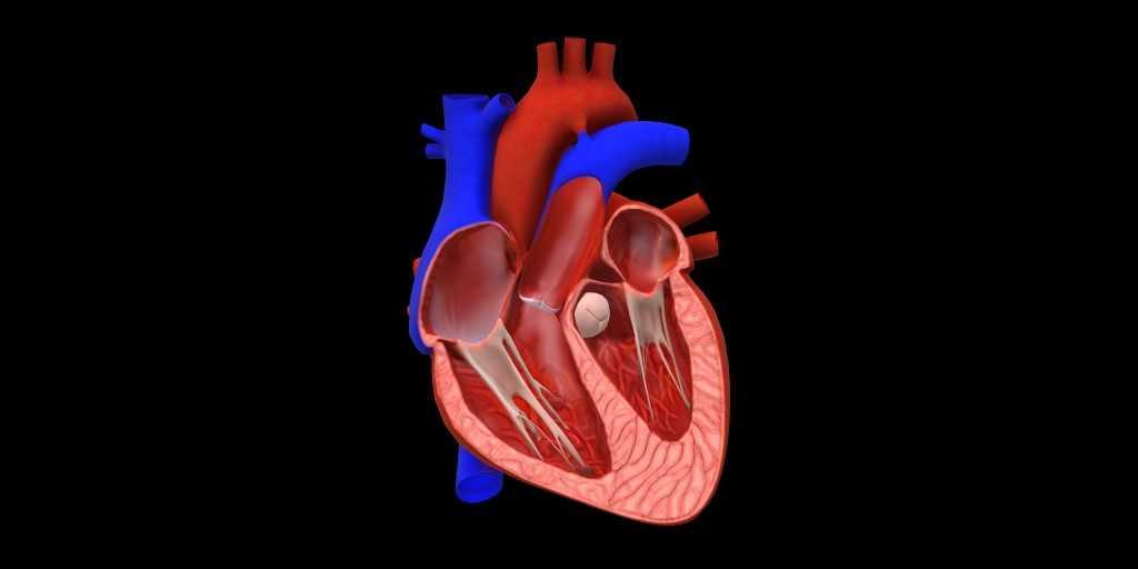 un-premier--coeur-imprimé-3D