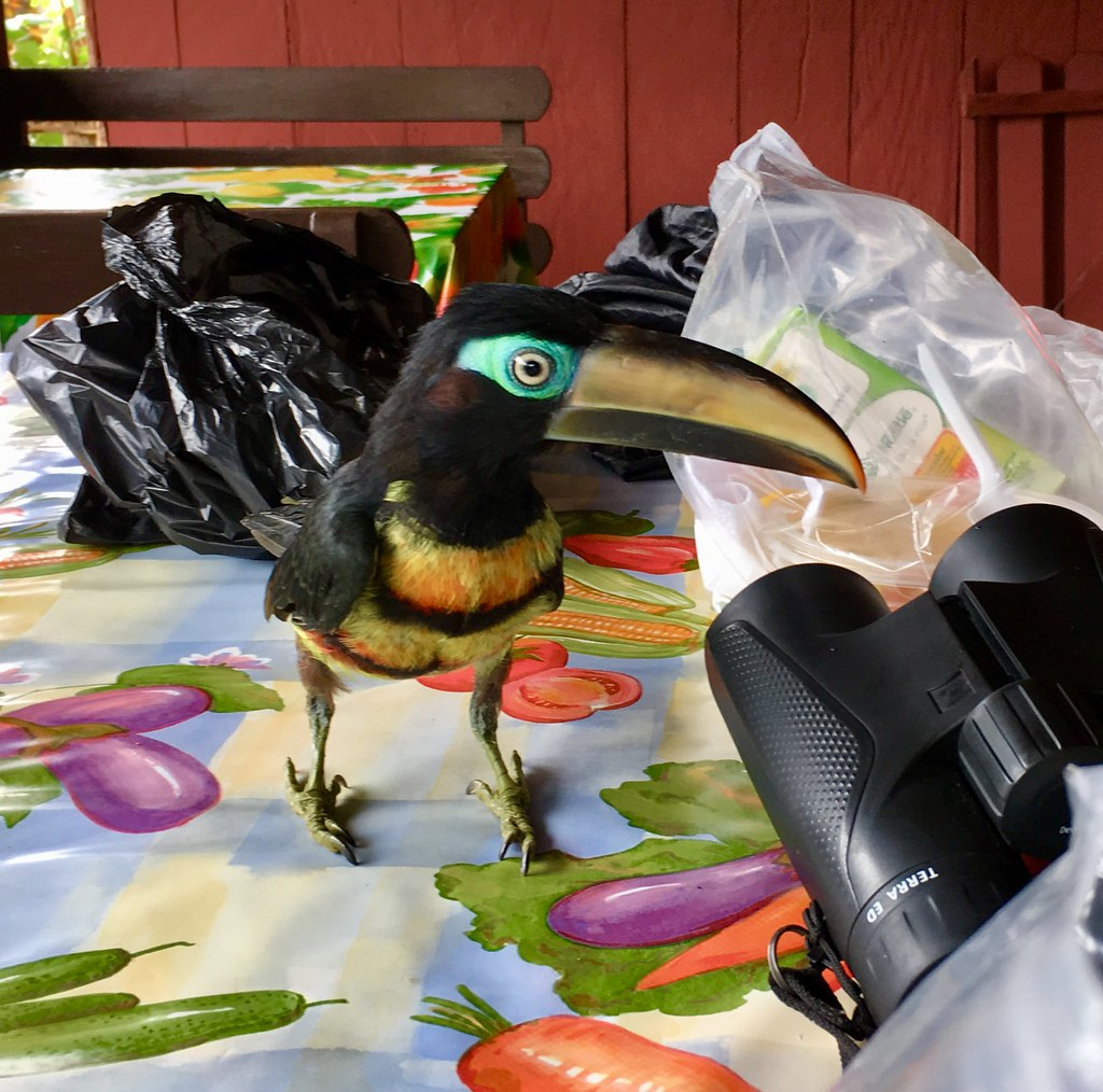 """Why did you bring binoculars?"""