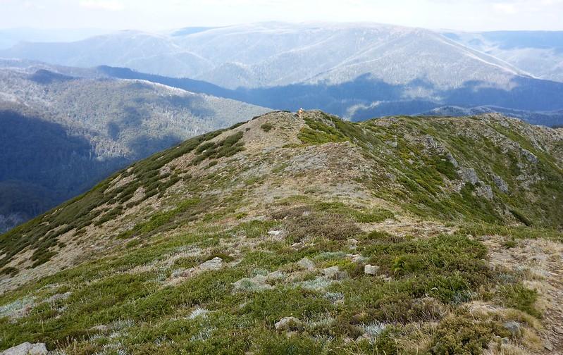 Quartz Ridge Mt Bogong