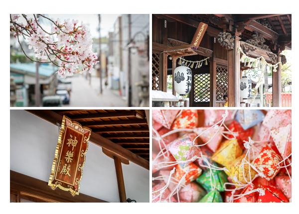 春の深川神社 愛知県瀬戸市 桜の花 おみくじ