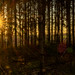 Sunrise in the forest by Peter u Hilde