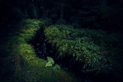 Kleine Bachläufe im Wald