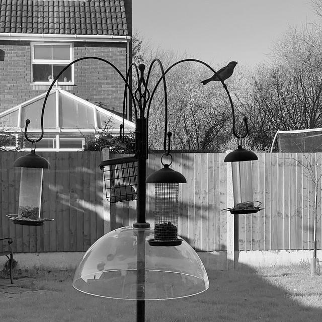 bird on the feeder