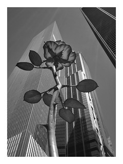 NYC - Rose III, Zuccotti Park, Lower Manhattan | by rdc154