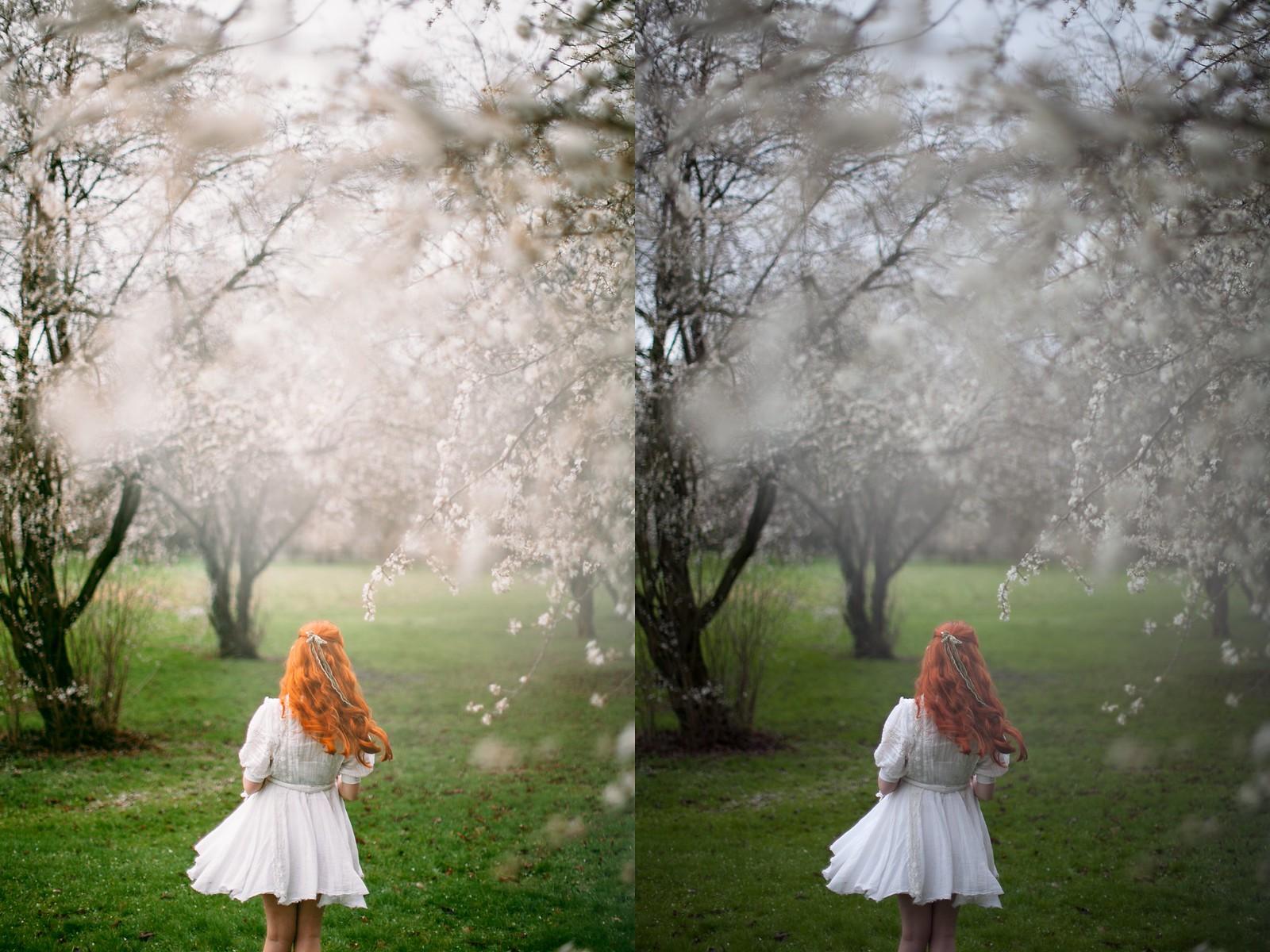 daffodilscollage
