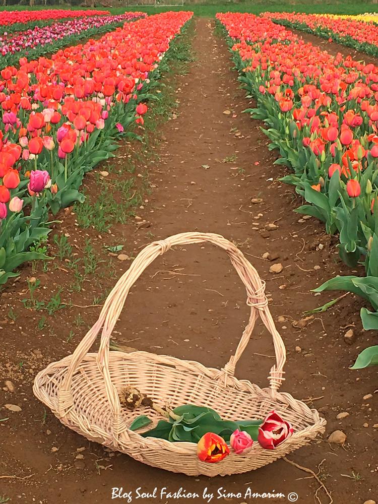 Olha que fofura o cestinho para colher as tulipas