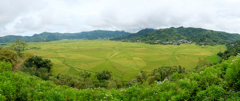 Spider Rice Fields, Ruteng, Flores Indonesia