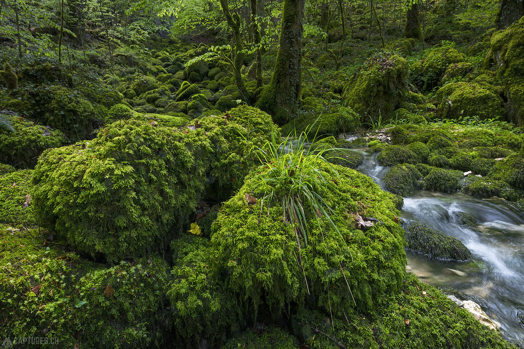 The green lush - Gorges du Pichoux