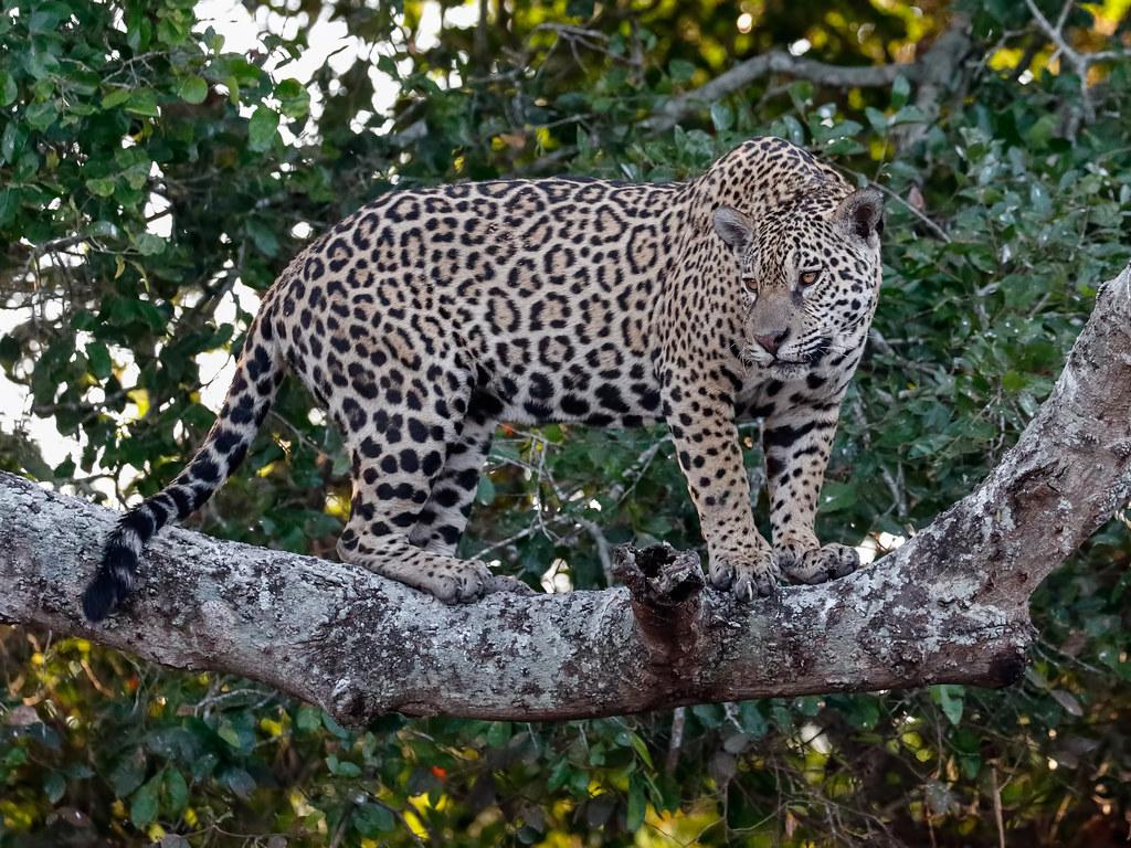 Pantanal_3088