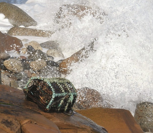 Lost Lobster Pot In Wave Spray