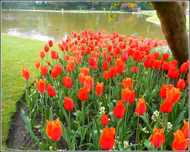 Red Tulip Bed ..