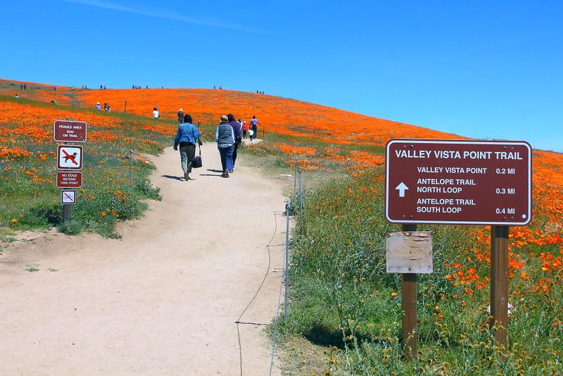IMG_6433 Antelope Valley California Poppy Reserve