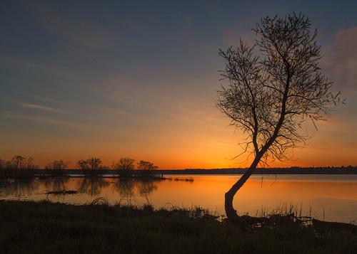 tree silhouette sunrise dawn daybreak lake sky landscape chatfieldstatepark lakechatfield colorado