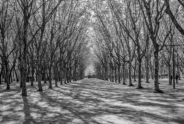 Promenade dans Bordeaux... Beau temps