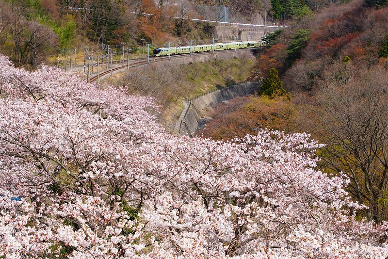 四季島、桜の諏訪峡を往く