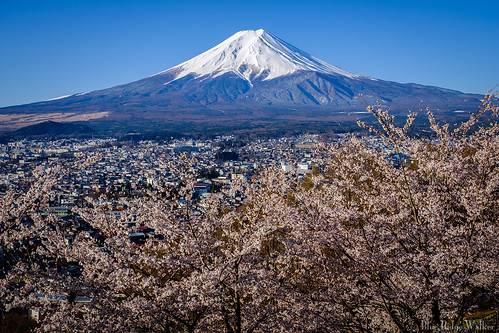The spring view of Mt.Fuji from Arakurayama sengen park