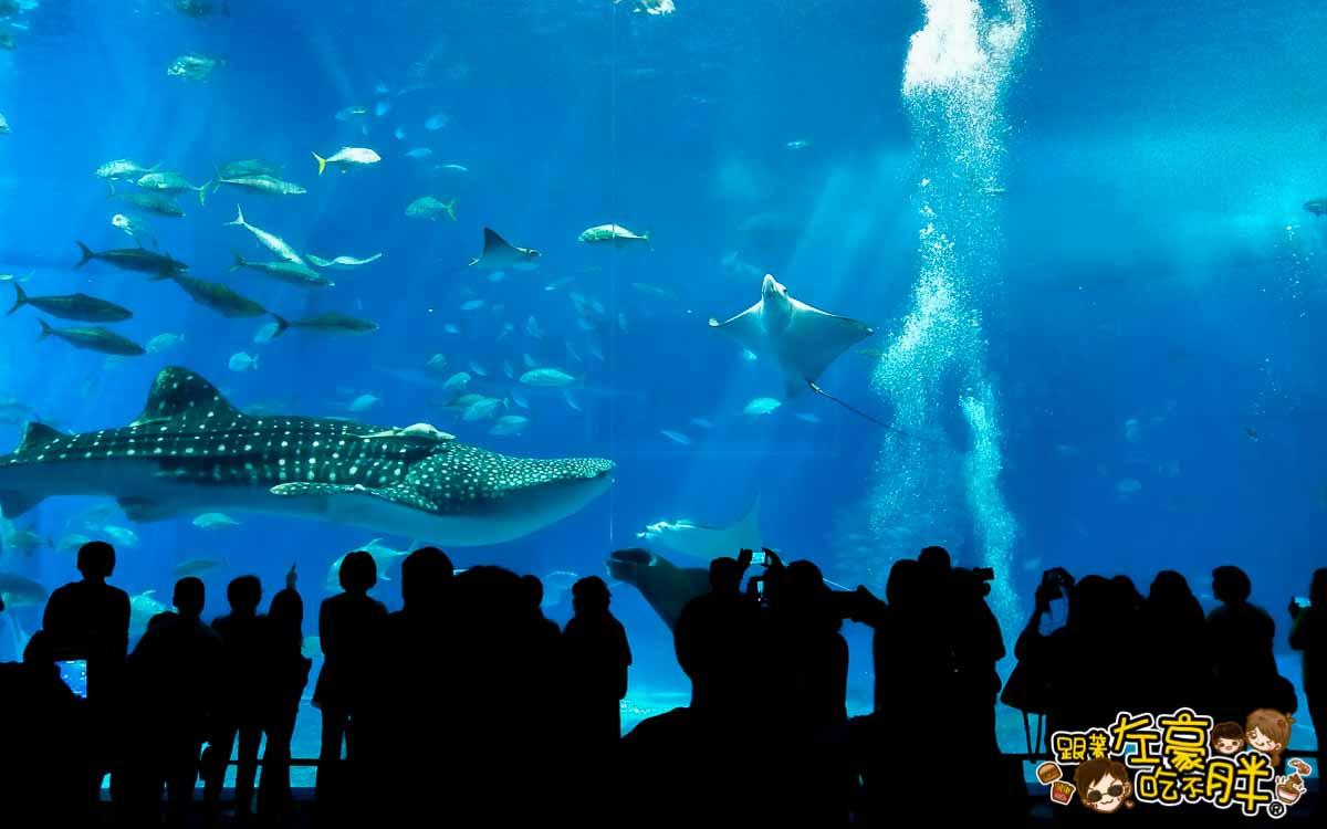 沖繩美麗海水族館-37
