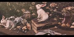 Garden Bunnies.