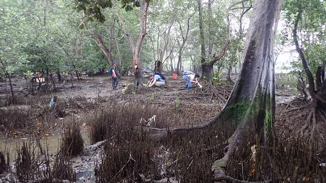 Bryozoan survey, Lim Chu Kang mangroves