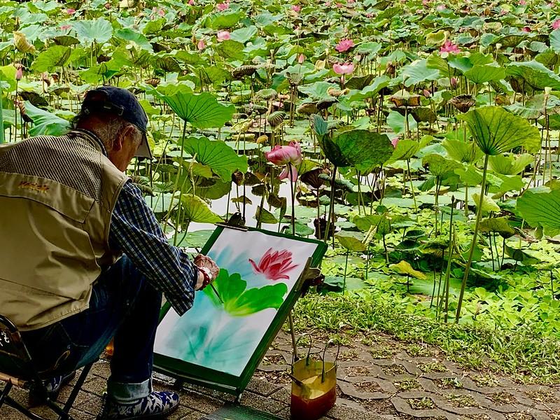 臺北植物園荷花開2019