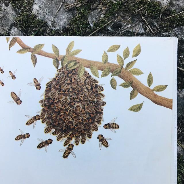 a abelha-mestra