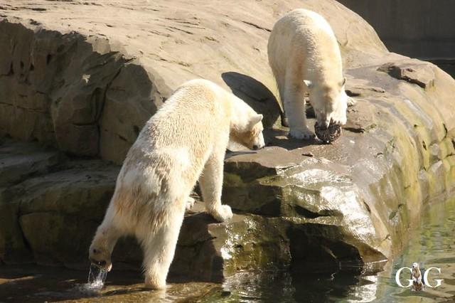 Besuch Zoo Rostock 22.+23.04.2019111