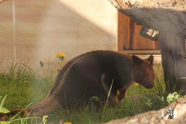 Besuch Zoo Rostock 22.+23.04.2019137