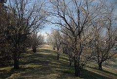 Path by Lewvan Drive