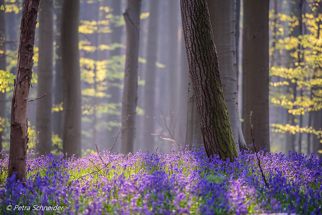 Playing with light in the bluebell forest