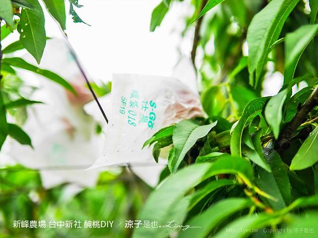 新峰農場 台中新社 醃桃DIY 2