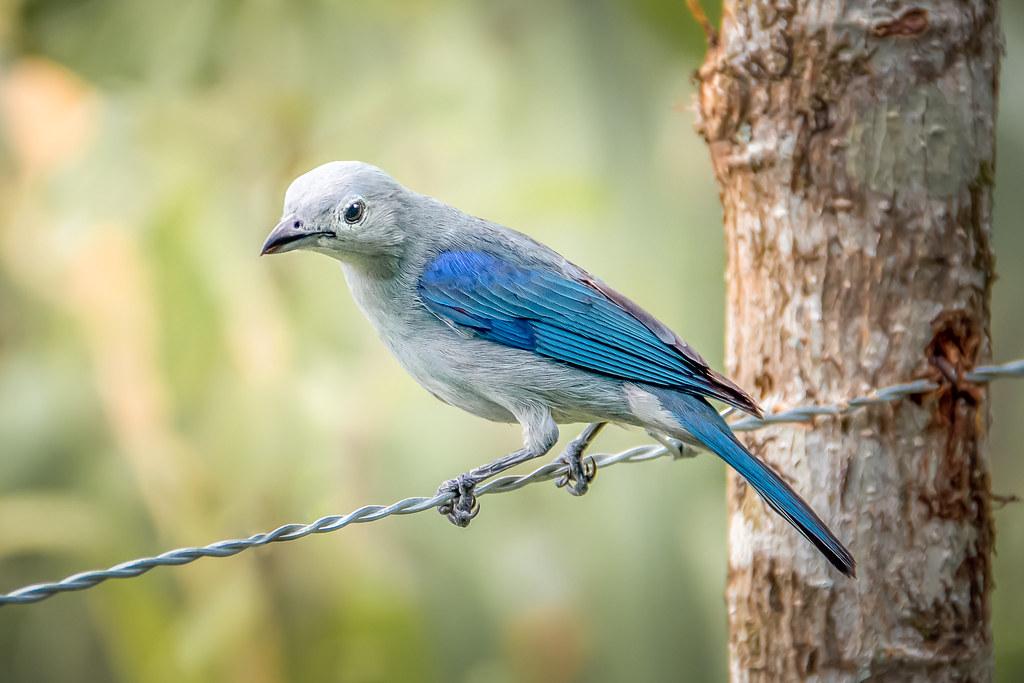 Blue Grey Tananger