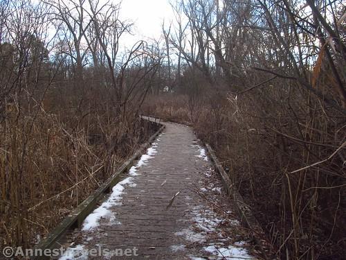 Boardwalk through a swampier area of Corbett's Glen