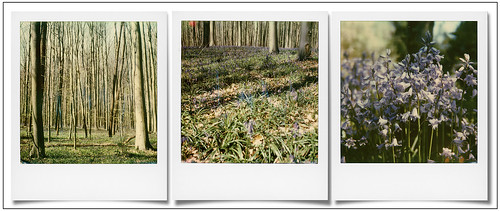 Bois de Hal ... | by @necDOT