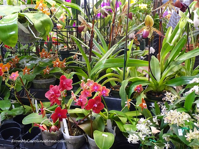 Orchid Show 2019