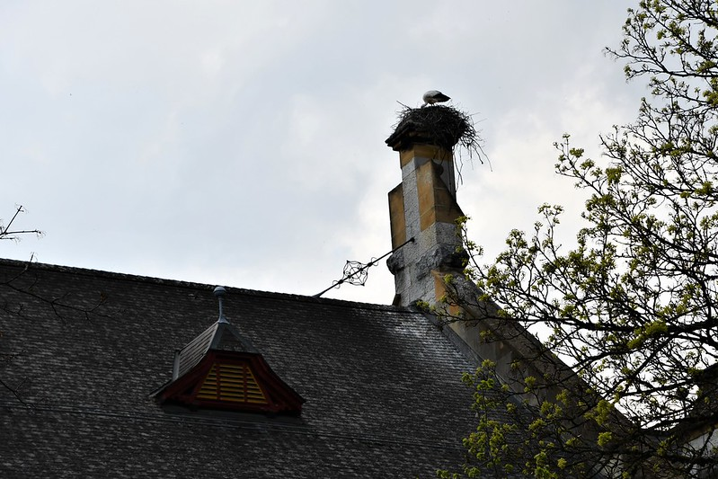 Stork on Konzertsaal 19.04.2019 (2)