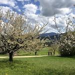 2019-04-17 Schwarzbuebeland_Fred (47)
