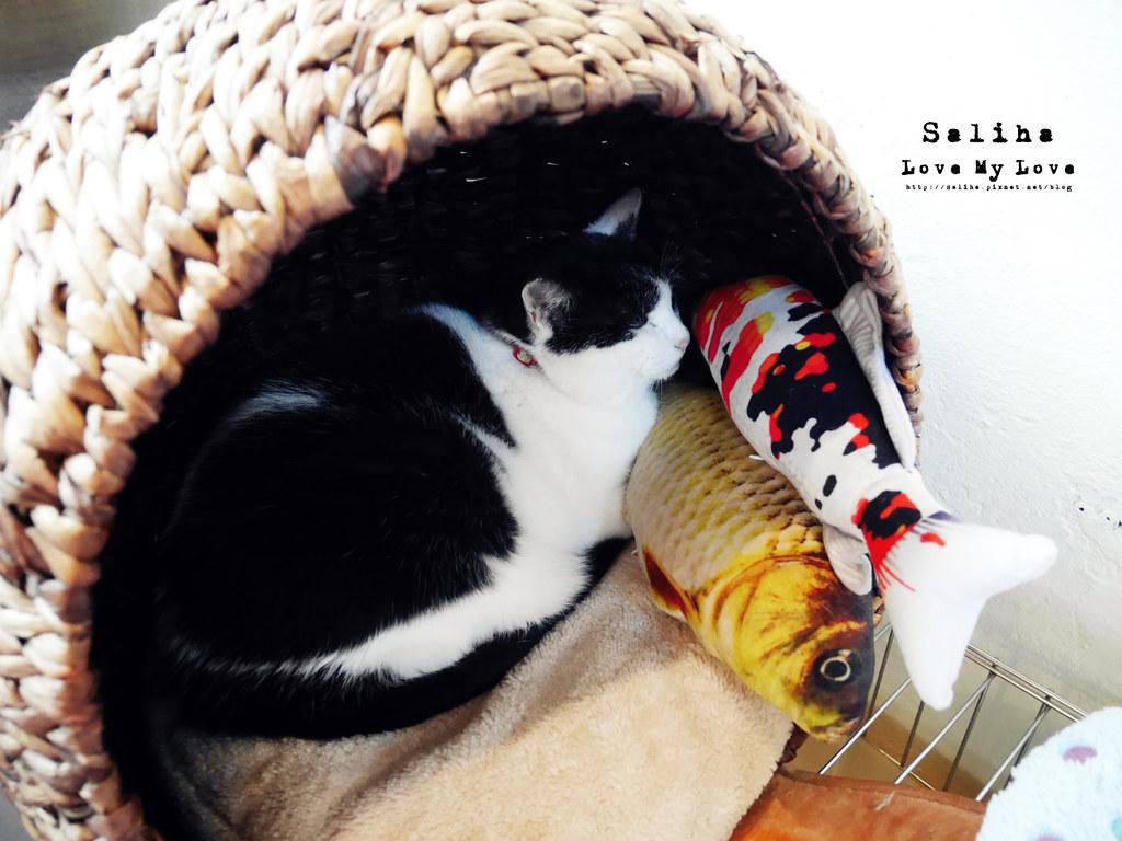 猴硐Empress Gallery Catwalk 219有貓咪咖啡館下午茶 (23)