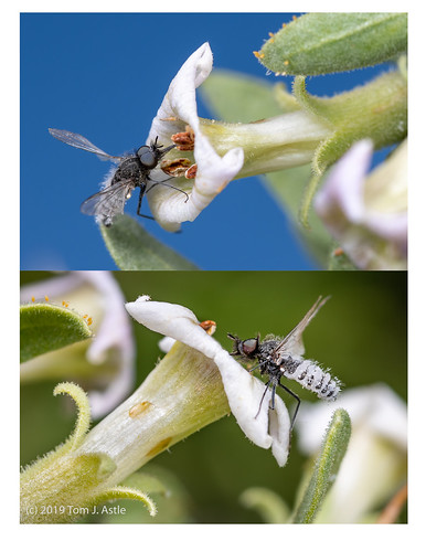 Ex-Fly | by Tom's Macro and Nature Photographs