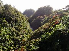 Maulua Stream