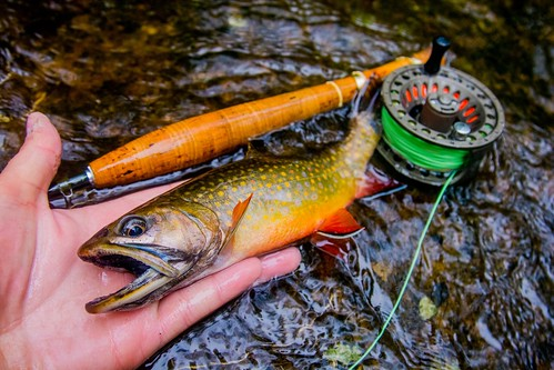 Photo of a nice looking brook trout