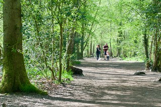 Walking in Worcester woods
