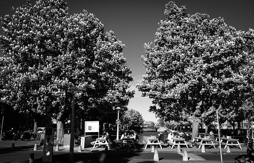 De Rijpgracht. Amsterdam. The chestnut trees.
