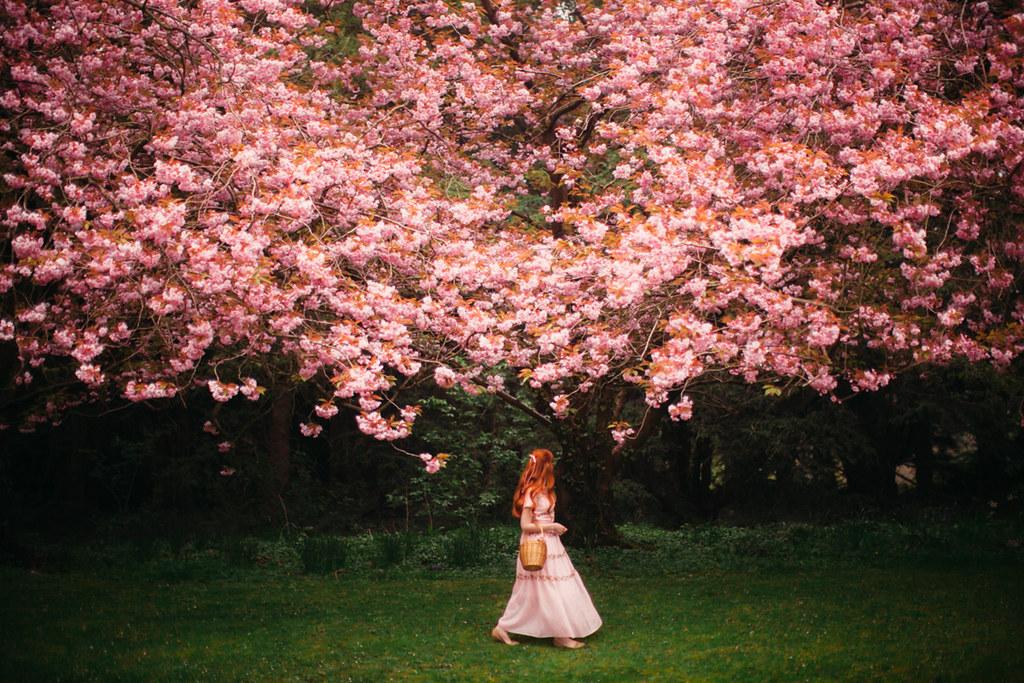 cherry blossom-31