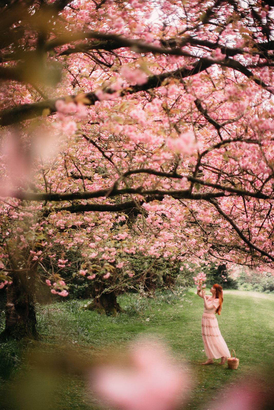 cherry blossom-26